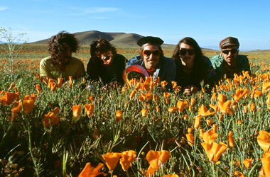 The Growlers – Good Advice
